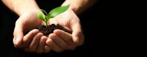 Hands holding seedling in dirt